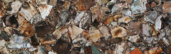 petrified wood brown