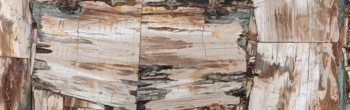 petrified wood retro leather finish